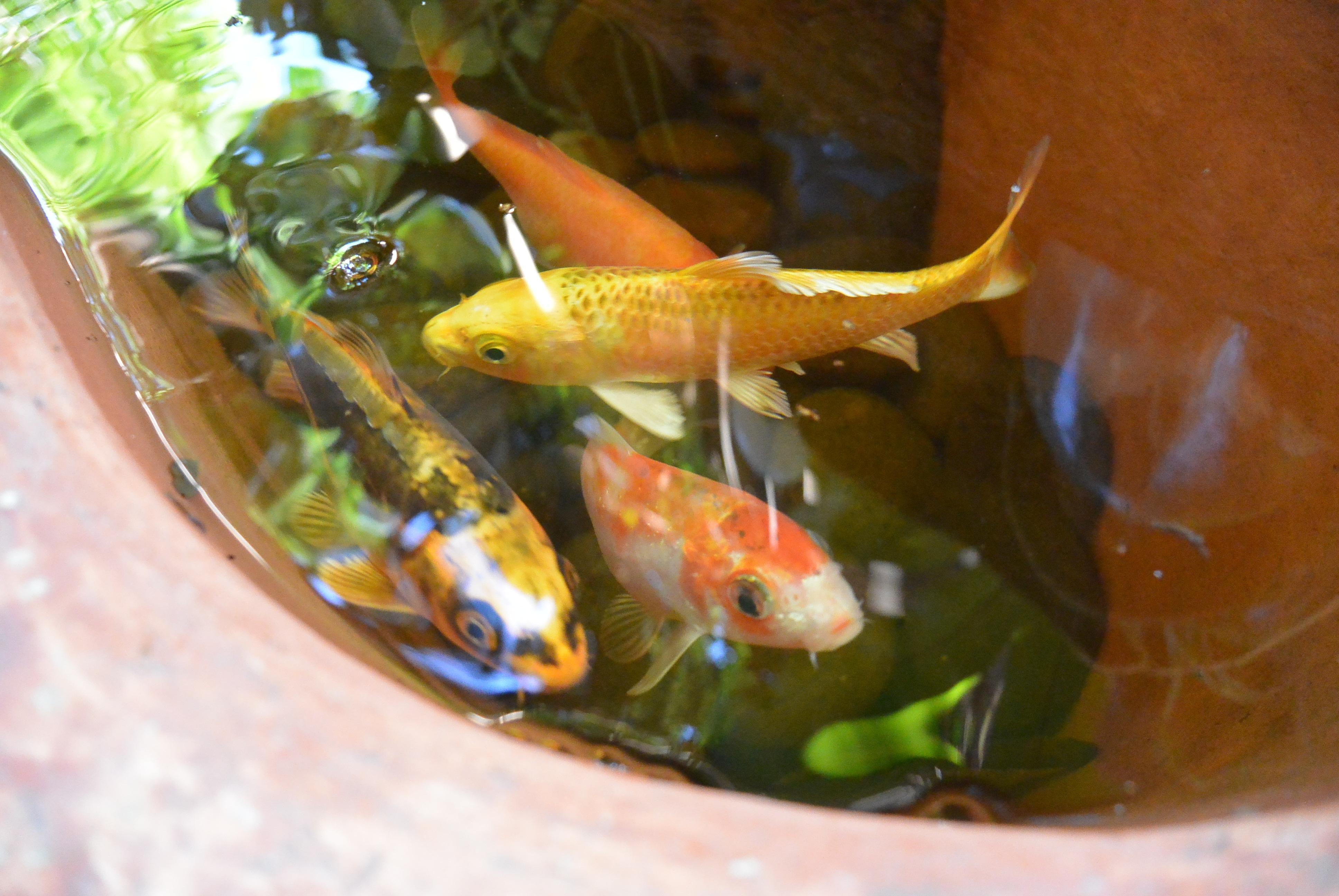 Shambala the wayfarer 39 s dare for Mai mai fish